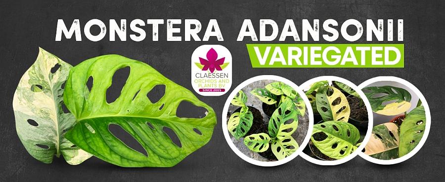 Bijzondere planten
