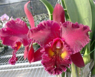 "Blc. Chia Lin ""New City"""