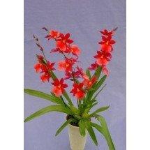 Voorbeeld foto de plant heeft 2 takken