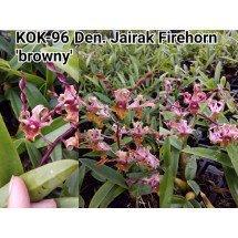 "Dendrobium Jairak Firehorn ""Browny"""