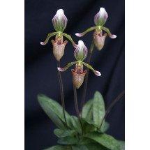Deze plant is een voorbeeld Foto