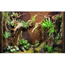 Zachte Boomvaren panelen / Tree fern panels (50 x 12,5 x 1,5 cm)