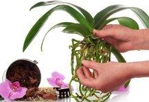Orchideeën Accessoires